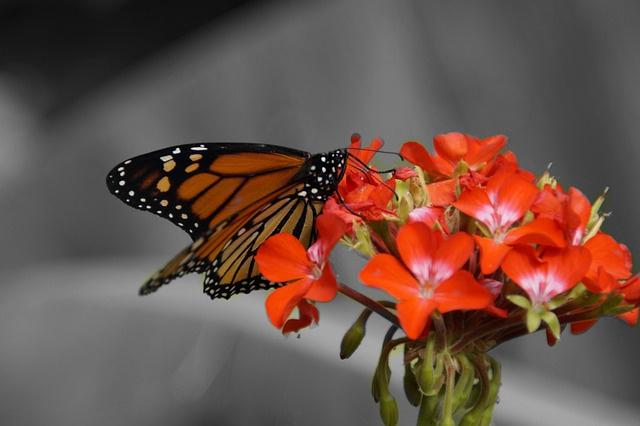 La farfalla e la fine del mondo